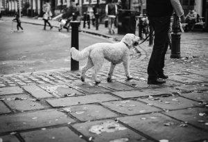 Dierenverzekering Amsterdam