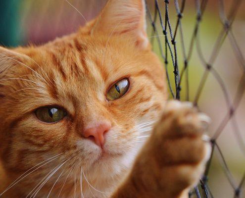 Kattenverzekering vergelijken