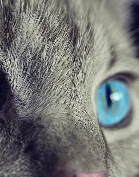 Kattenverzekering afsluiten