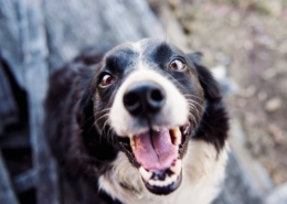 gezond gebit hond