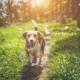 hond verzekeren of niet