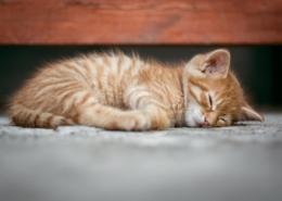 zieke kat behandelen