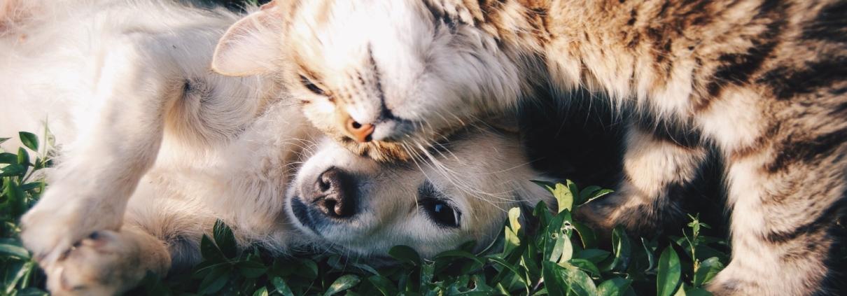 beste dierenverzekering