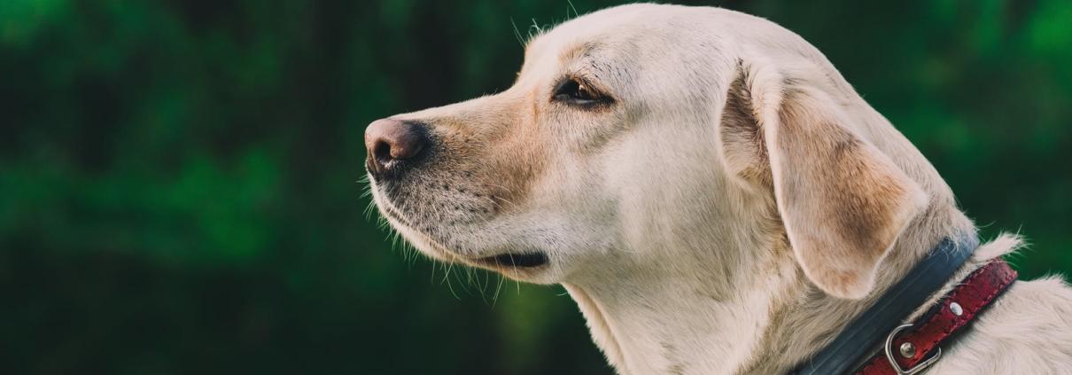 Hond eet niet