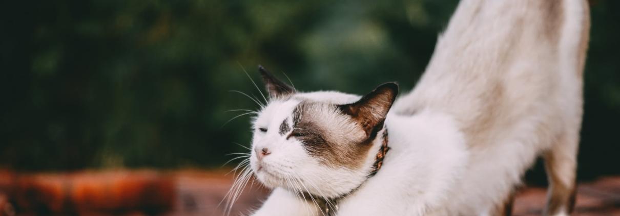 kattenverzekering wel of niet
