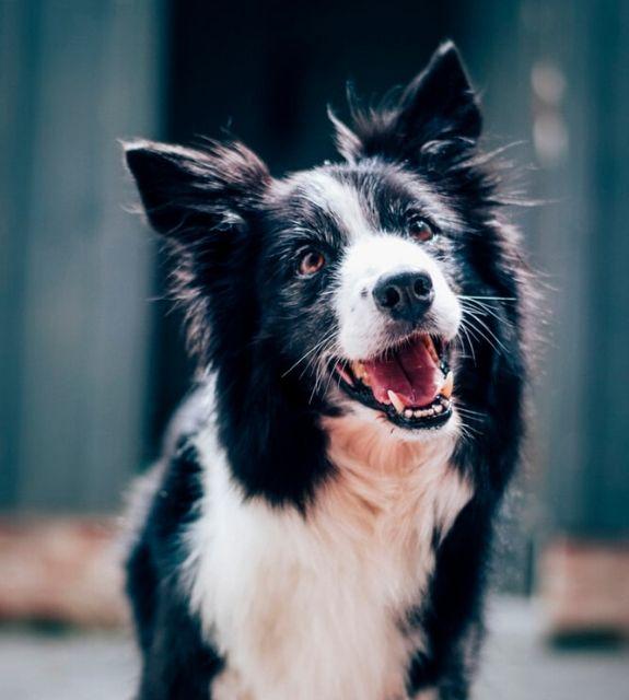 puppyverzekering