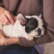 meest voorkomende ziekten honden
