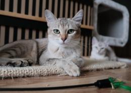 dierenverzekering kosten
